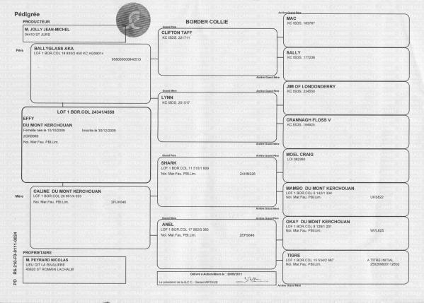Genealogie effy